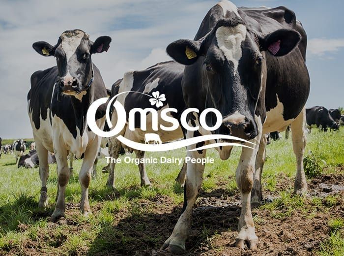 omsco logo with cows